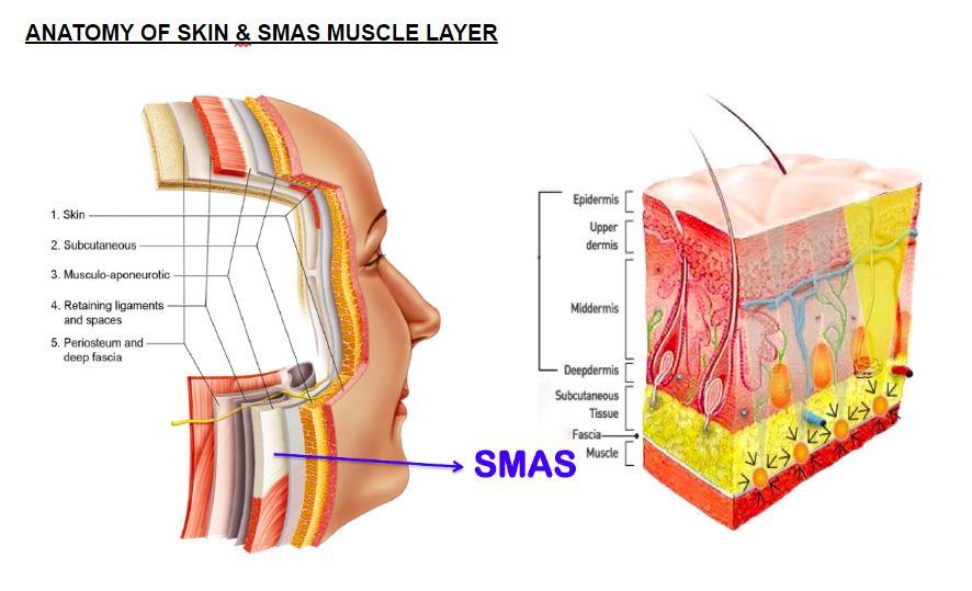 HIFU Anatomy