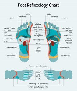 Foot refelxology chart